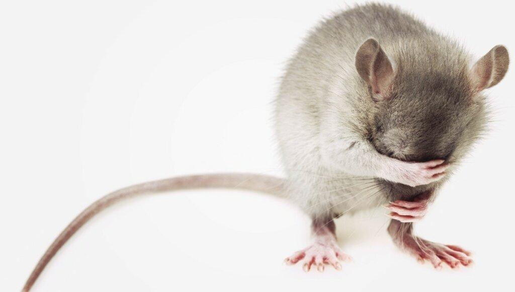 cruelty free veganskt green little heart mouse no animal testing
