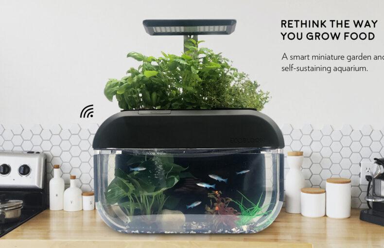 EcoBloom – företaget bakom det smarta miniväxthuset för mikrogrönt
